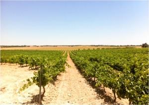 El Cerrón vineyard